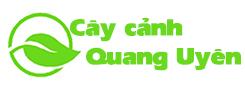 Cây cảnh Quang Uyên