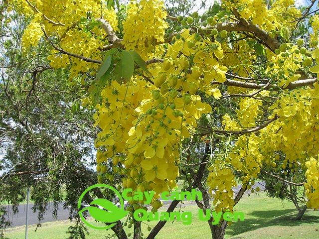 Cây thích hợp trồng ở nơi nhiều nắng